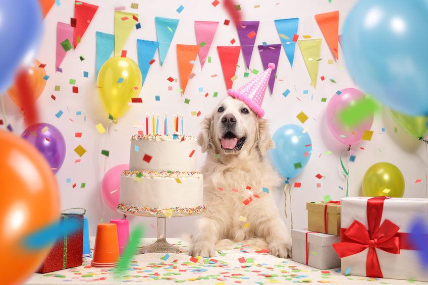 Psia narodeninová oslava, oslava psích narodenín, zvieracie narodeniny